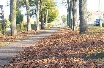 Autumnal image